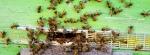 BeeHive-20130211_4 copy